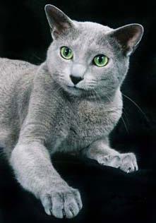 Пройти тест. русская кошка-самая обыкновенная порода.они считаются очень...
